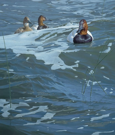 "Daniel Smith Handsigned and Numbered Limted Edition Print:""On the Rise - Canvasbacks"""