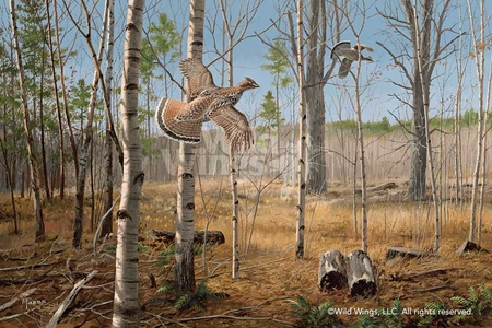 "David A. Maass Handsigned and Numbered Limited Edition Print:""Grouse Meadow-Ruffed Grouse"""