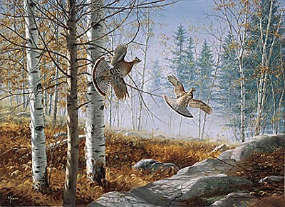 "David Maass Limited Edition Print:""A Morning Double-Ruffed Grouse"""