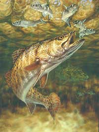 "Don Ray Handsigned and Numbered Limited Edition Print: ""Gator Trout"""