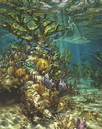 "Don Ray Handsigned and Numbered Limited Edition Print: ""Ray's Reef"""