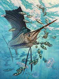"Don Ray Handsigned and Numbered Limited Edition Print: ""Sailfish & Moon Jellies"""