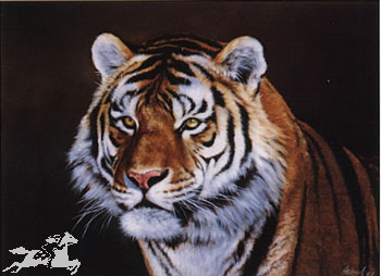 "Edward Aldrich Handsigned Open Edition Print:""Siberian Tiger"""
