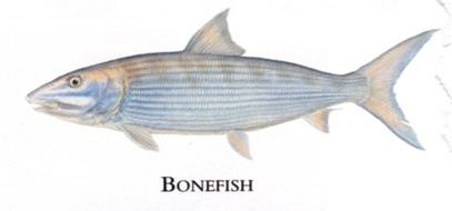 "Flick Ford Artist Handsigned Open Edition Giclee Print on Paper :""Bonefish"""