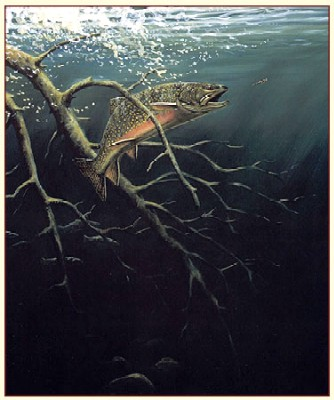 """Fred W.Thomas Handsigned & Numbered Limited Edition Print: """"Blackwater Brookies"""""""