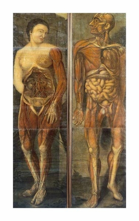 "Jacques Fabian Gautier D'agoty Fine Art Open Edition Giclée:""Anatomical Drawings of Male and Female Figures"""