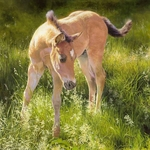 """Bonnie Marris Hand Signed Limited Edition Canvas Giclee:""""Montana Colt"""""""
