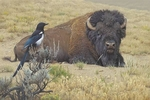 """Daniel Smith Hand Signed and Numbered Limited Edition Canvas Giclee:""""Prairie Home Companions"""""""
