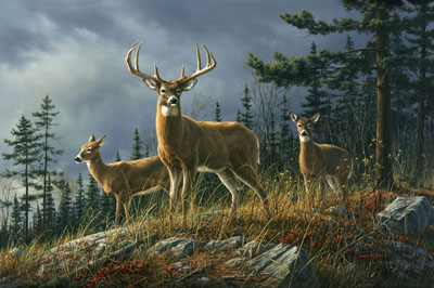 """Jim Hautman Handsigned and Numbered Limited Edition: """"Autumn Whitetails"""""""