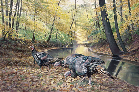 "Jim Kapser Wild Wings Limited Edition  Print: ""Acorn Hunt - Turkey"""