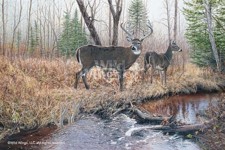 "Jim Kasper Hand Signed and Numbered Limited Edition Print:""The Survivor – Whitetail Deer"""