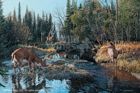 "Jim Kasper Handsigned and Numbered Limited Edition Print: ""Trespassing-Whitetail Deer"""
