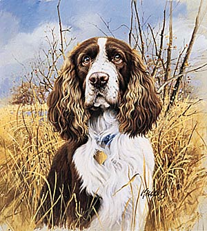"Jim Killen Edition Print:""That's My Dog - Springer """