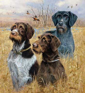 """Jim Killen Hand Signed and Numbered Limited Edition Print: """"Great Hunting Dogs-Drahthaars"""""""