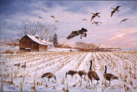"Jim Killen Handsigned & Numbered Limited Edition Print:""The Gathering - Canada Geese"""