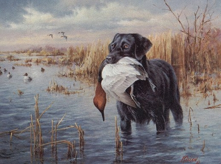 "Jim Killen Limited Edition Artist Proof Canvas:""Dogs in Action - Black Lab"""