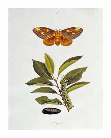 "John Abbot Fine Art Open Edition Giclée:""The Natural History of the Rarer Lepidopterous Insects of Georgia 1794"""