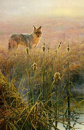 """John Seerey-Lester Limited Edition Print: """"Dawn on the Marsh - Coyote"""""""