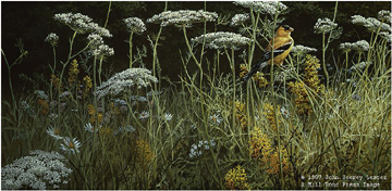 "John Seerey – Lester Limited Edition Print:""Evening Meadow - American Goldfinch"""