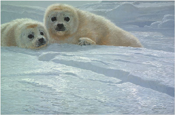 "John Seerey – Lester Limited Edition Print:""Ice Companions-Harp Seal Pups"""
