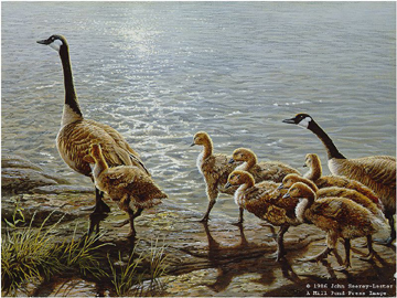 "John Seerey – Lester Limited Edition Print:""Lakeside Family - Canada Geese"""