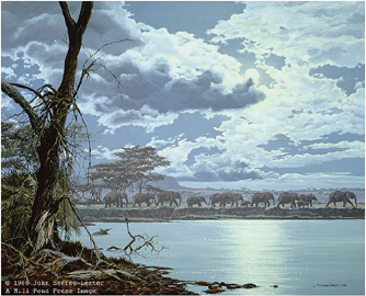 "John Seerey – Lester Limited Edition Print:""Night Moves - African Elephants"""