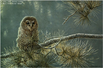 "John Seerey – Lester Limited Edition Print:""Out On A Limb - Young Barred Owl"""