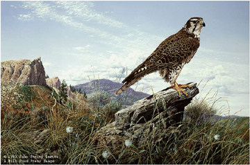 "John Seerey – Lester Limited Edition Print:""Plains Hunter - Prairie Falcon"""