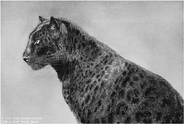 "John Seerey – Lester Limited Edition Print:""Regal Majesty"""