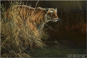 "John Seerey – Lester Limited Edition Print:""Something Stirred (Bengal Tiger)"""