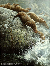 "John Seerey – Lester Limited Edition Print:""The Plunge-Northern Sea Lions"""