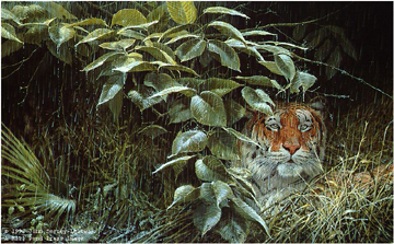 "John Seerey – Lester Limited Edition Print:""The Rains-Tiger"""