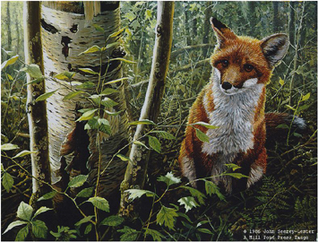 "John Seerey – Lester Limited Edition Print:""The Young Explorer-Red Fox Kit"""