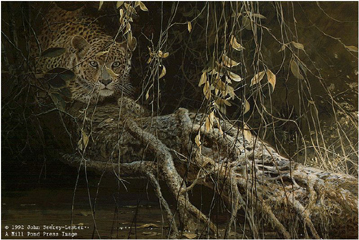 "John Seerey – Lester Limited Edition Print:""Young Predator-Leopard Cub"""