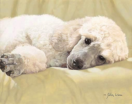 """John Weiss Limited Edition Print:""""Best Loved Breeds: Whtie Standard Poodle"""""""