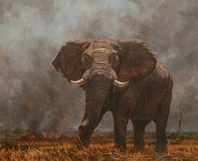"""Julia Rogers Hand Signed and Numbered Limited Edition Giclee on Canvas:""""Bush Fire"""""""