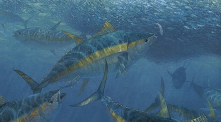 "Mark Susinno Handsigned & Numbered Limited Edition Print:""Wrecking Crew - Yellowfin Tuna"""