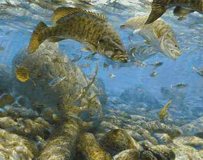"Mark Susinno Limited Edition Print: ""Fall Frenzy-Small Mouth"""