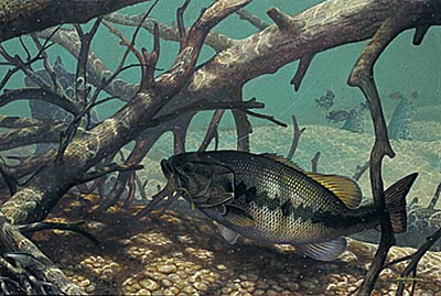 "Mark Susinno Limited Edition Print:""The Pick Up-Largemouth Bass"""