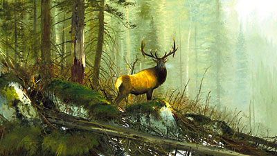 "Michael Coleman Hand Signed & Numbered Limited Edition Giclee on Paper:""In the Bighorns - Elk"""