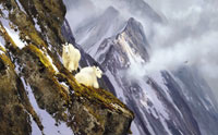 "Michael Coleman Handsigned & Numbered Giclee Limited Edition Print:""In The Cliffs, Rocky Mountain Goats"""