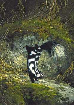 "Michael Coleman Handsigned & Numbered Giclee Limited Edition Print:""Little Spotted Skunk"""
