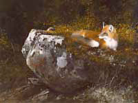 "Michael Coleman Handsigned & Numbered Giclee Limited Edition Print:""Morning Sun, Red Fox"""