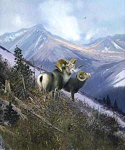 "Michael Coleman Handsigned & Numbered Giclee Limited Edition Print:""On The Ospika-Stone Sheep"""