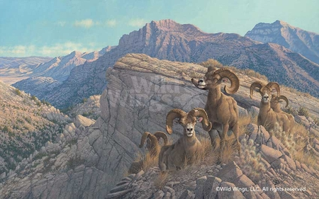 "Michael Sieve Hand Signed and Numbered Limited Edition: ""Desert Kings-Bighorn Sheep"""