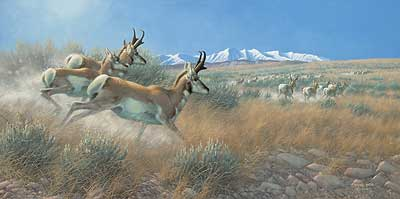 "Michael Sieve Hand Signed and Numbered Limited Edition Print:""Flat Out-Pronghorns"""