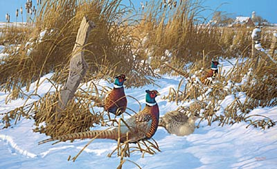 "Michael Sieve Handsigned and Numbered Limited Edition Print: ""Corner Post Refuge-Pheasants """
