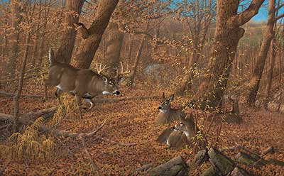 "Michael Sieve Handsigned and Numbered Limited Edition:""Ten O'Clock Rounds - Whitetail Deer"""