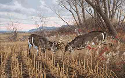 "Michael Sieve Limited Edition Print: ""Battling Bucks - Whitetail"""