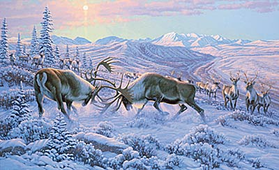 "Michael Sieve Limited Edition Print: ""Battling Bulls - Caribou"""